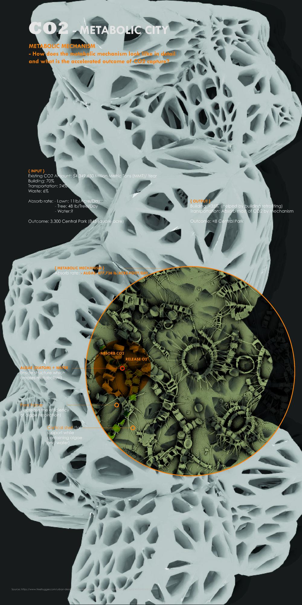 Metabolic mechanism inside