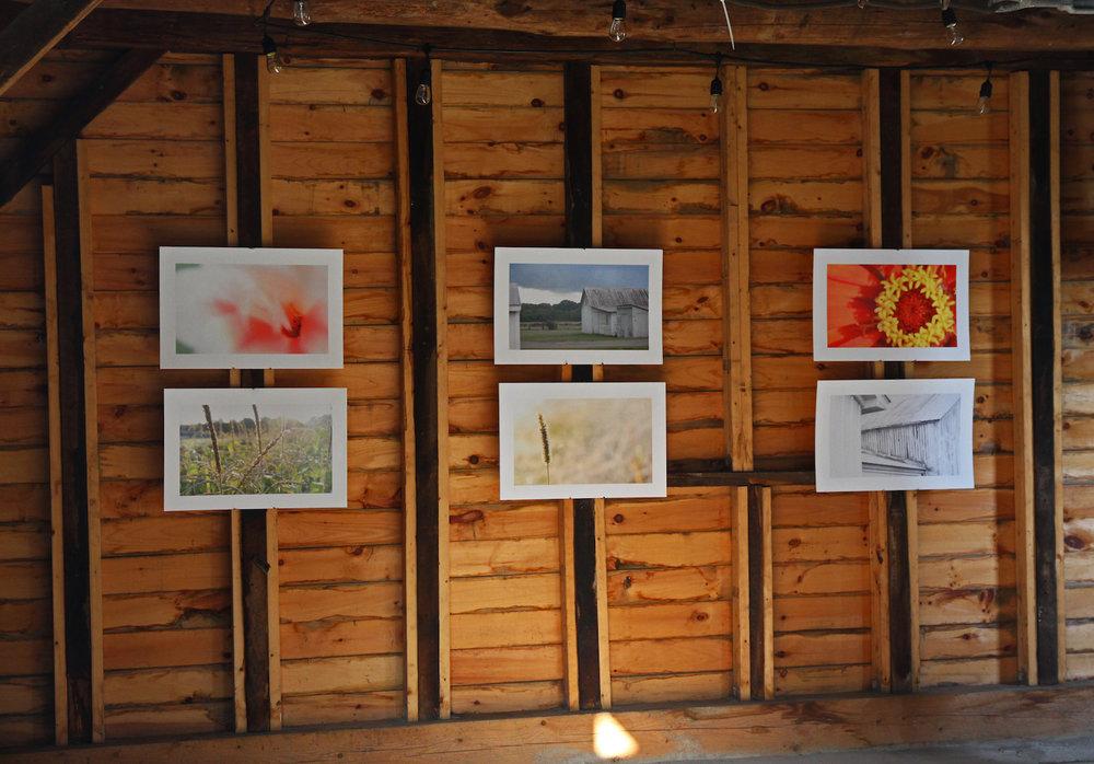Art Exhibit - Tom Stock Photos.jpg