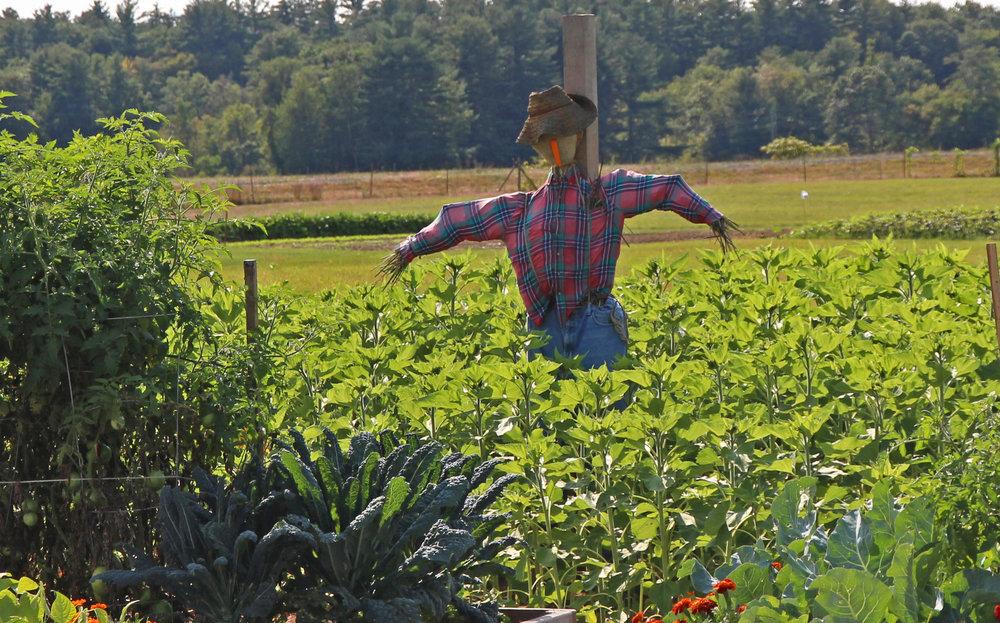 Community Gardens - Scarecrow.jpg