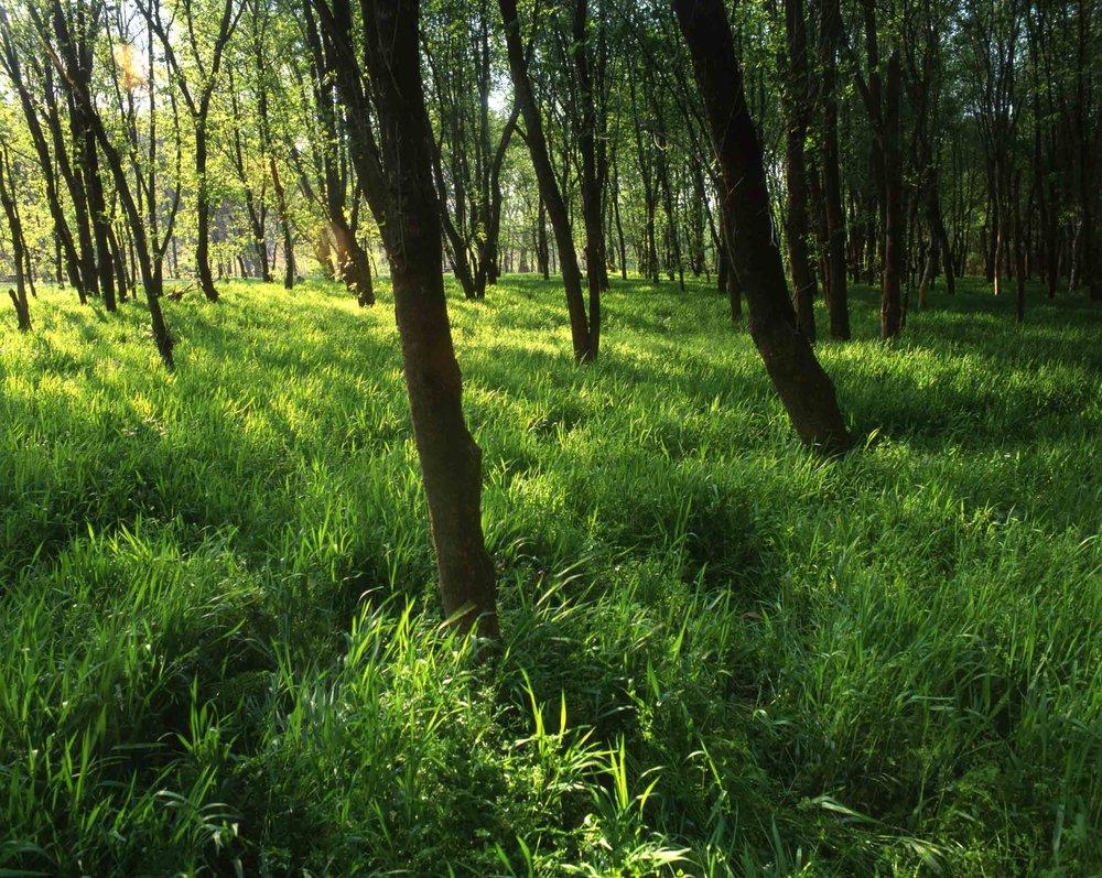 Grassy Savanna