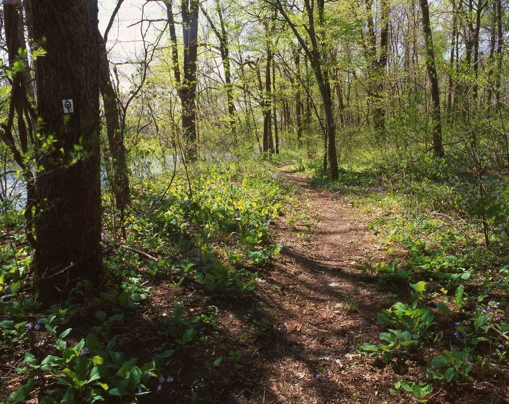 Trail at Sam A. Baker State Park