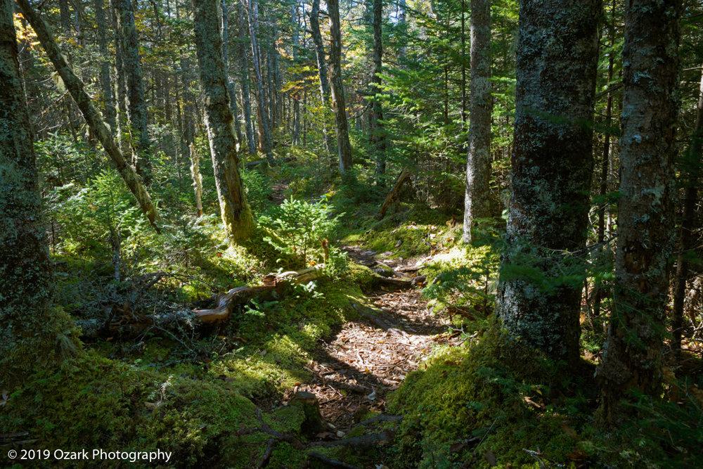 mossyt trail 1 mod.jpg