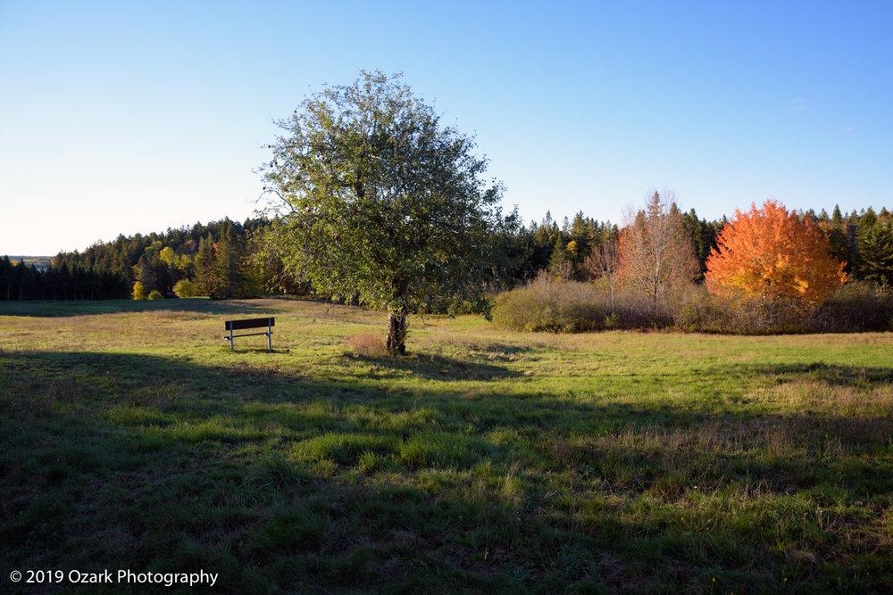 lone tree bench.jpg
