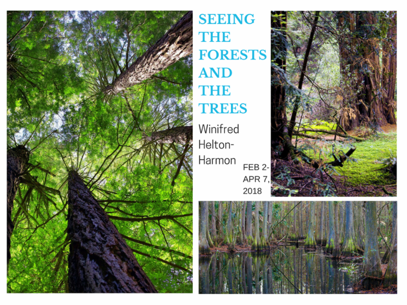 Email Blast SEEING THE FORESTS AND THE TREES.png
