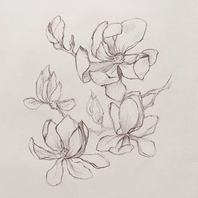 A quick floral pencil study. ✏️ - As someone who spends a lot of their time looking at computer screens, I love when I get the chance to work with my hands. - There's something about physical tasks that really help get me in a creative and meditative zone. - What sort of actions help you get your focus going?