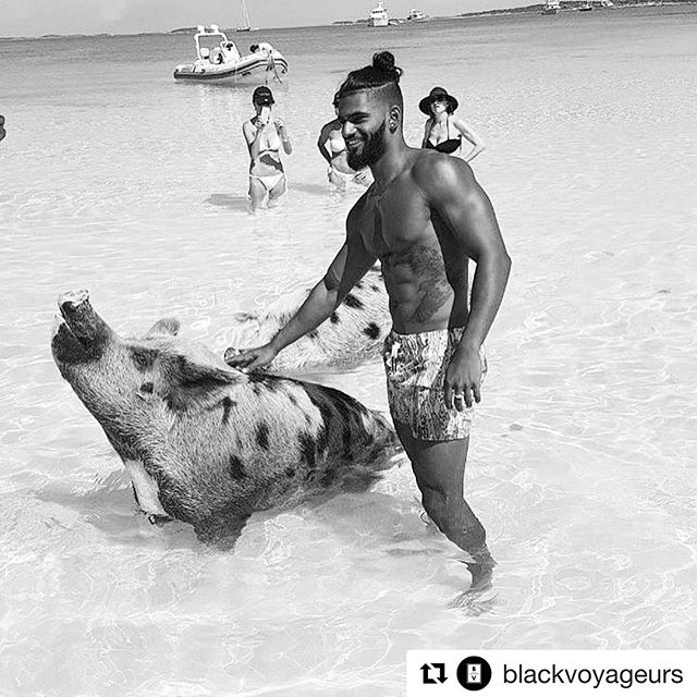 Now we know pigs can walk and swim, but can they fly? Repost: @blackvoyageurs #culture #pigs #world❤️ #photography #photojournalism #happypig