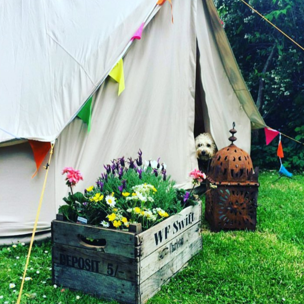 Being a huge fan of my home comforts Iu0027ve always tried to make our tent cosy but the purchase of a bell tent three years ago was a game changer. & Malmo u0026 Moss: Campling on Camping. u2014 Malmo u0026 Moss