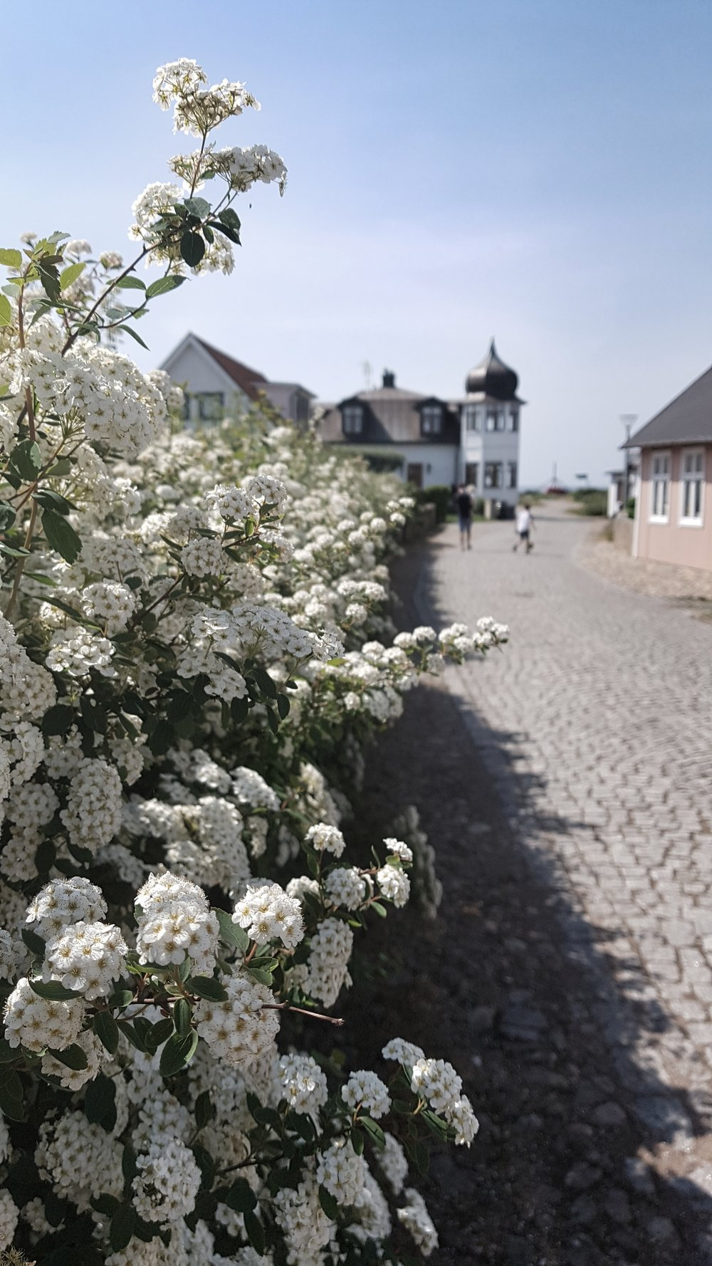 Exploring the gorgeous cobbled streets of Torekov