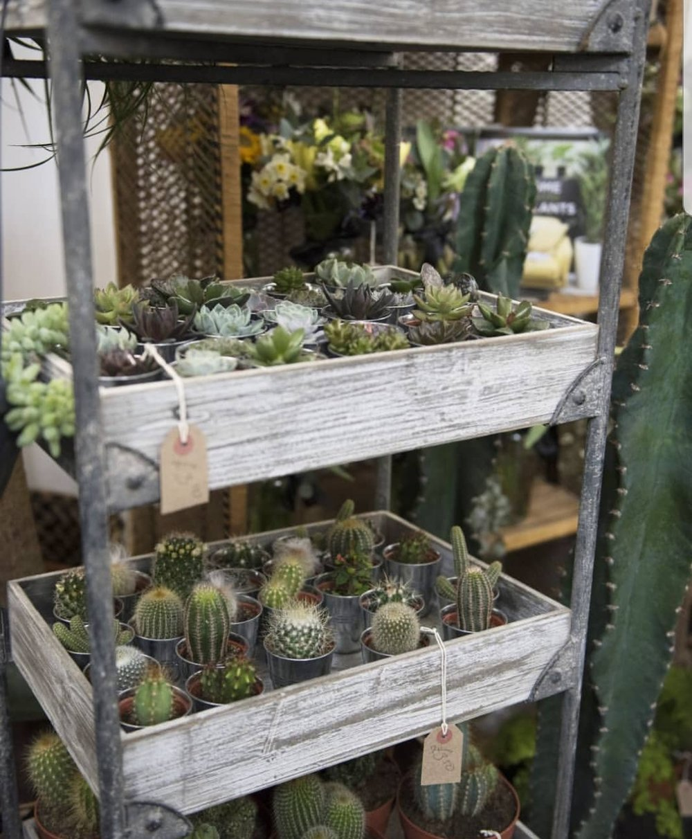 Sorting you out for succulents will be Your London Florist