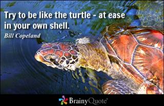Turtle (At ease in own shell caption).jpg