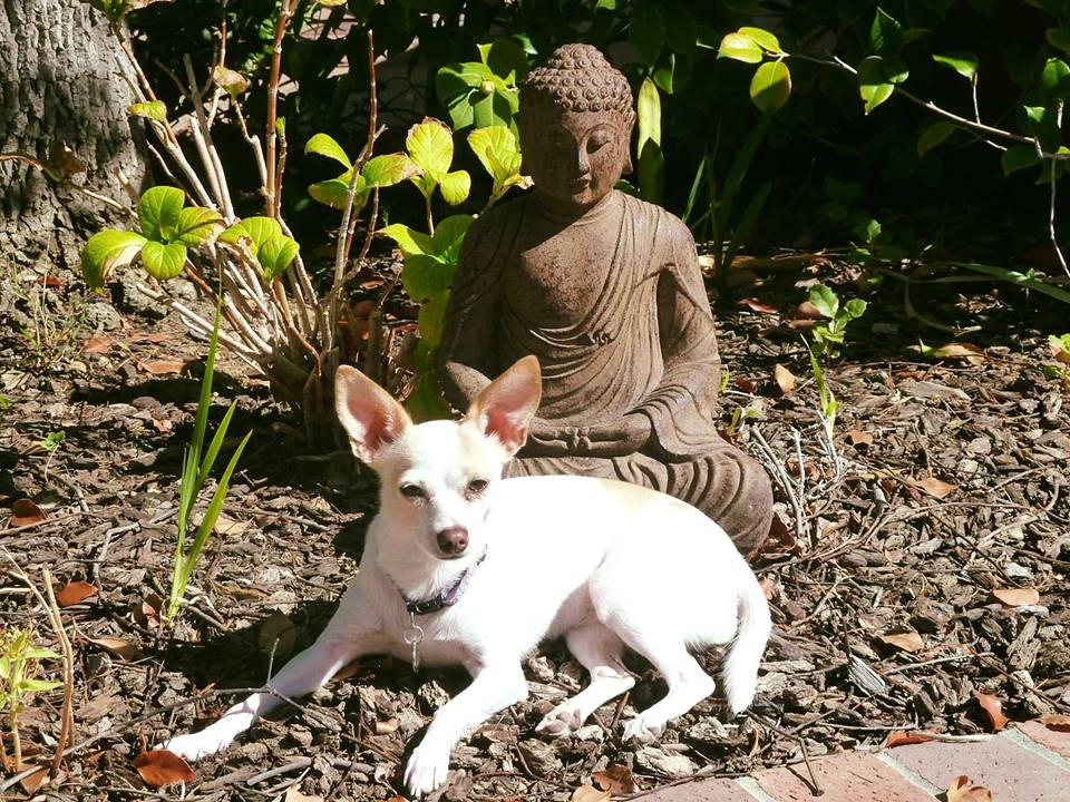 Daisy & Buddha on pation.jpg