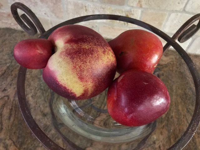 Nectarines in Bowl IMG_0860.JPG