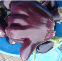 Hitch hikers thumb eggplant.png*.png