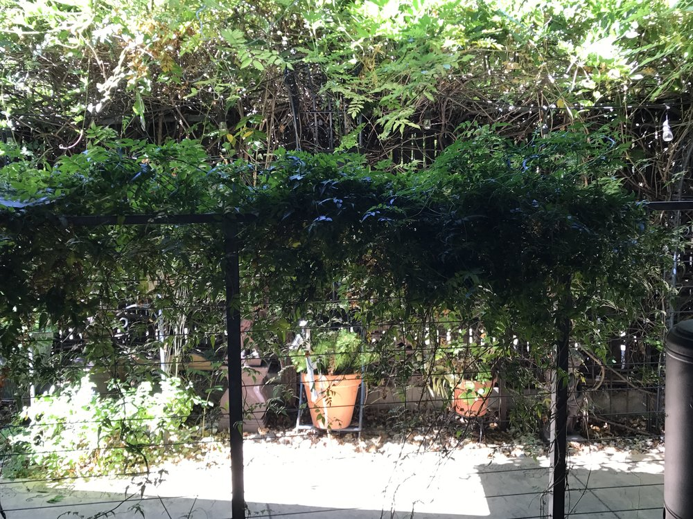 Arbor & pots IMG_1740.JPG