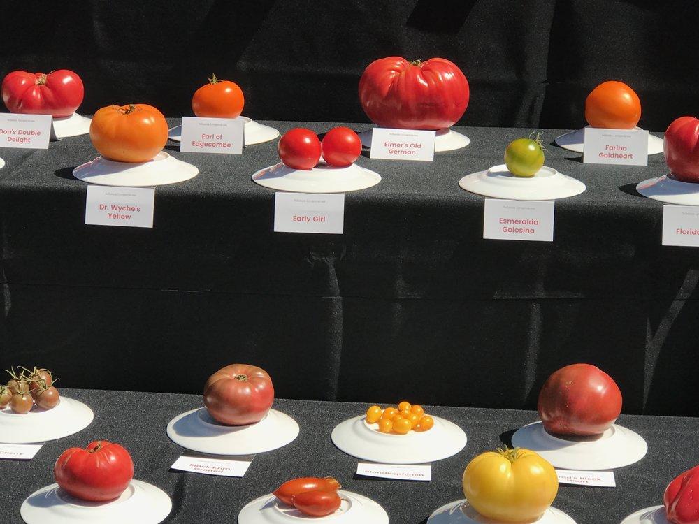 Tomato Display IMG_1835.jpg