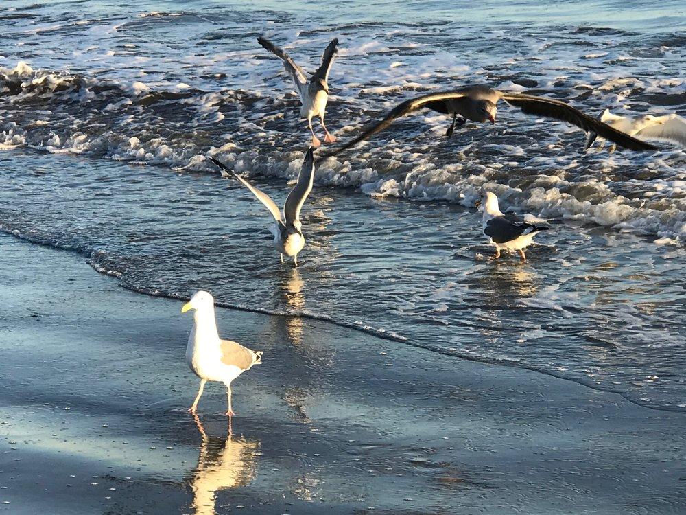 Seagulls 1 IMG_2146.jpg*.jpg
