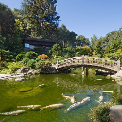 hakone-gardens with Koi Ponds & Bridge.jpg*.jpg