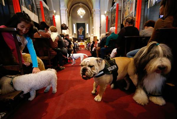 Photo of church w pets in Nice, France.jpg