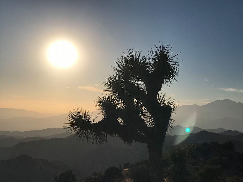 A Joshua Tree w Moonlike sun.jpg