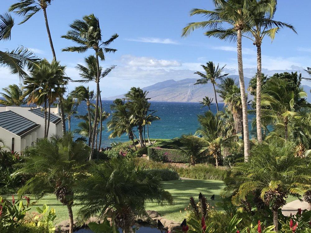 Ocean View w Palms W.jpg*.jpg