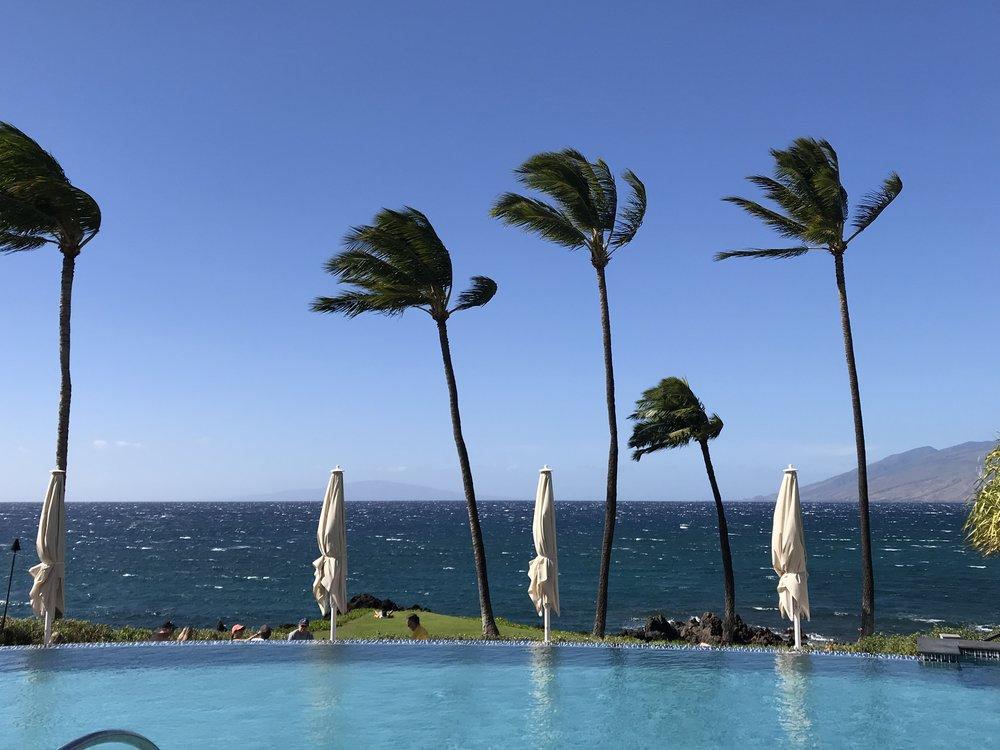Palms rocking, Ocean & Umbrellas.jpg*.jpg