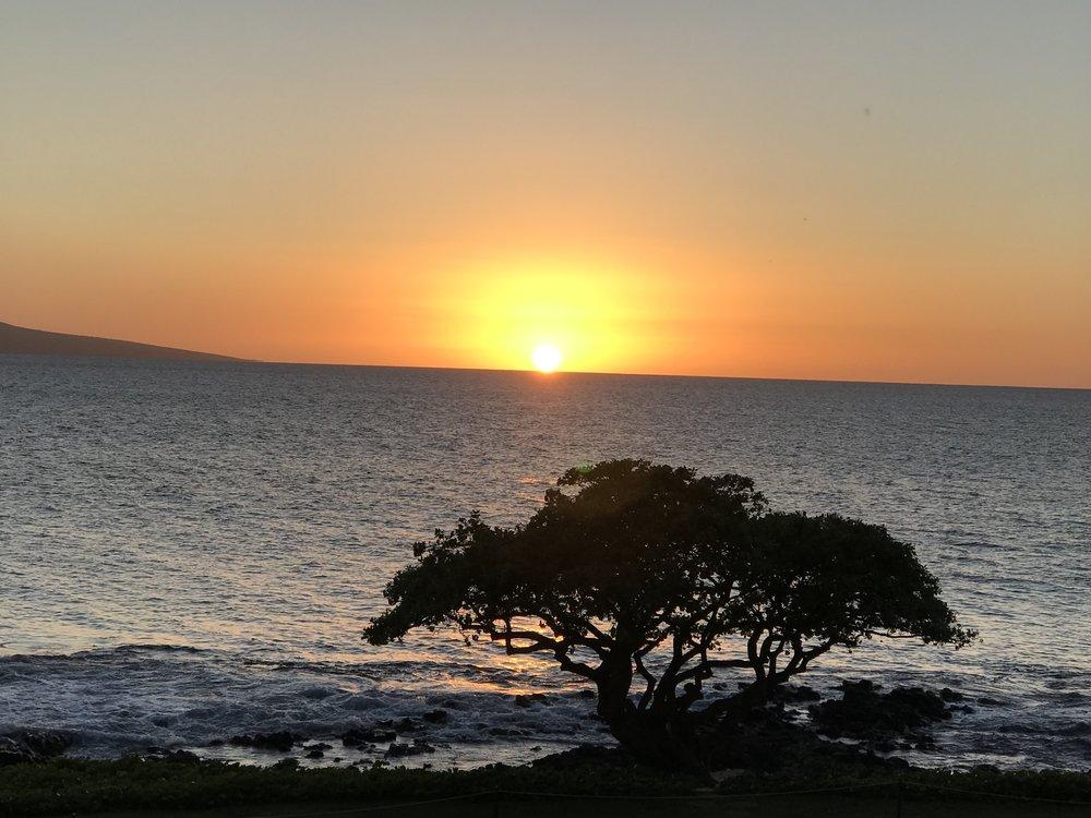 Sunset w tree 2.jpg*.jpg