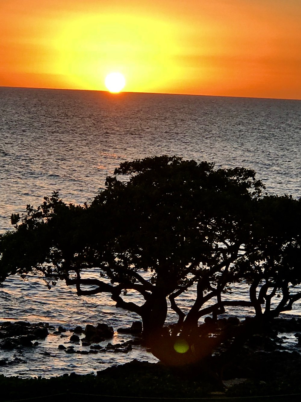 Sunset w tree 3.jpg
