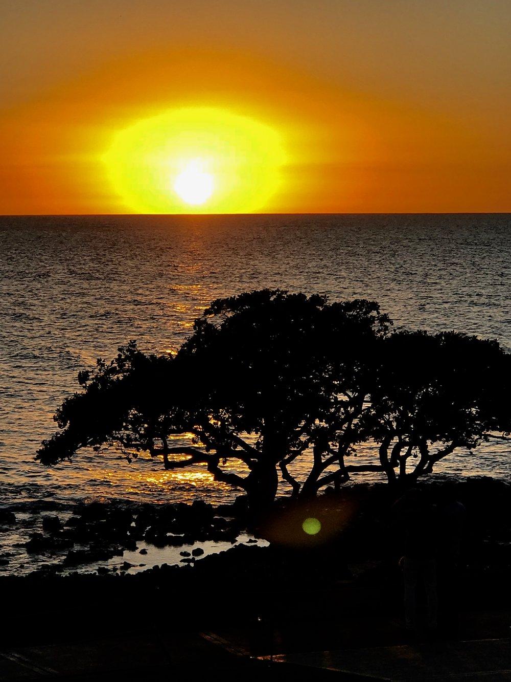 Sunset w tree 1.jpg*.jpg