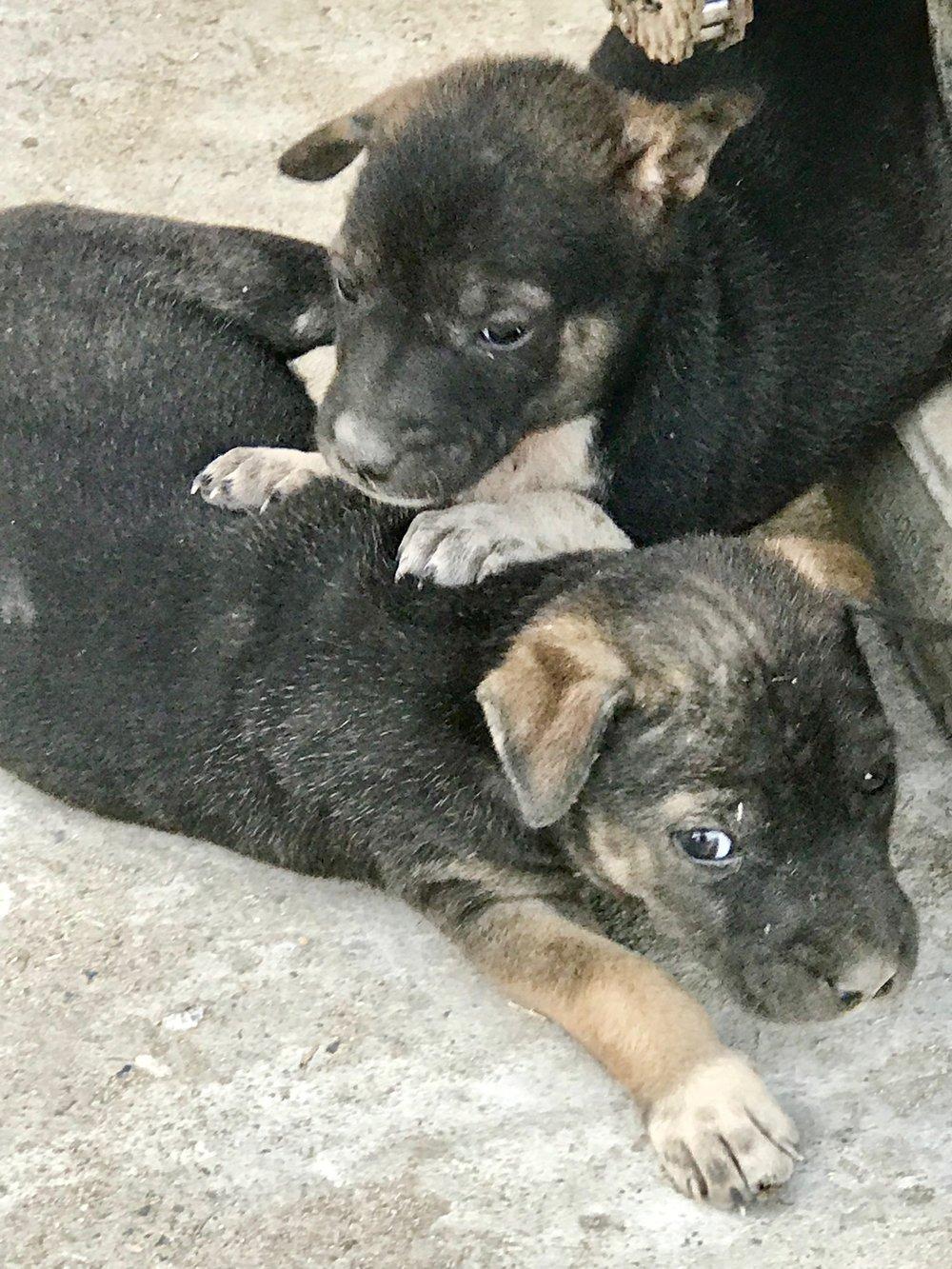 Monastery puppies.jpg*.jpg