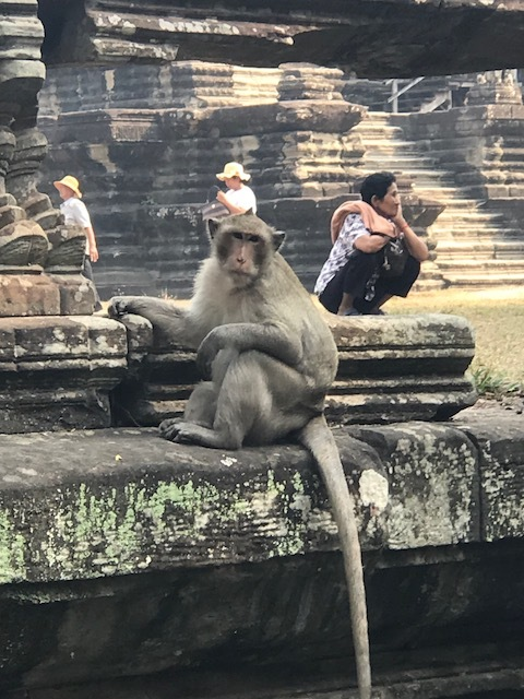 Monkey on the wall.jpg*.jpg