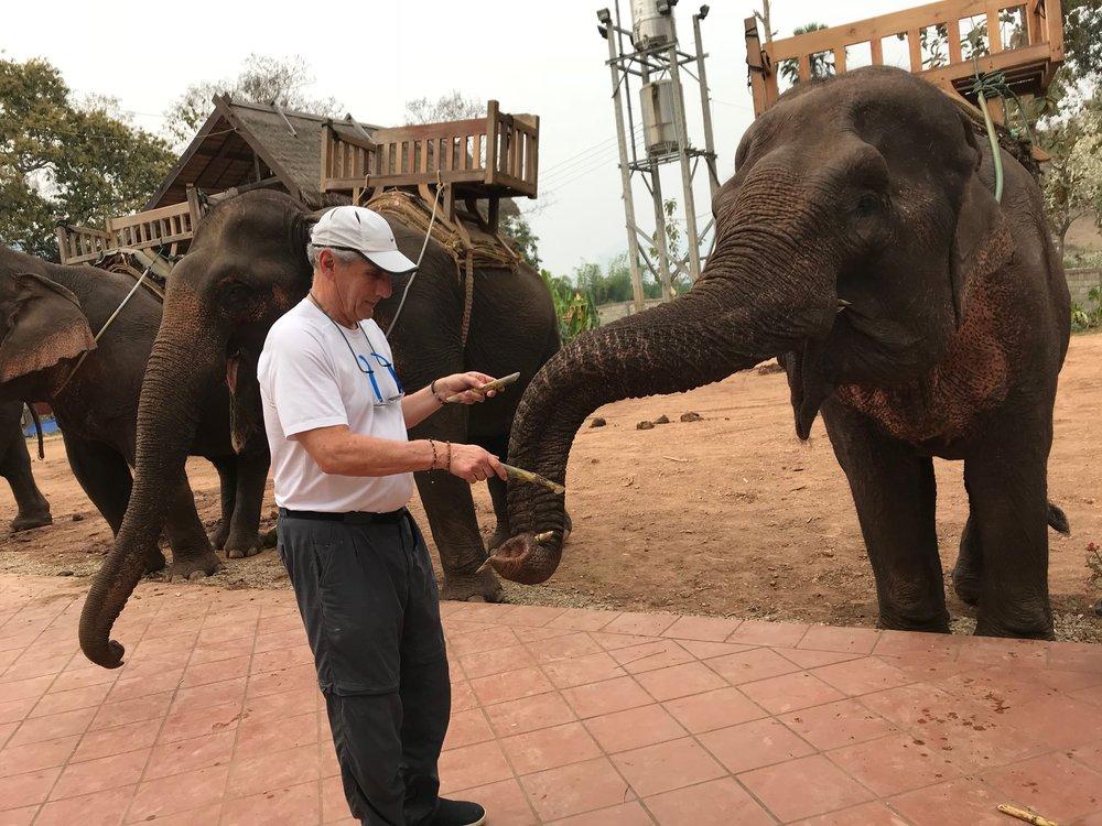 Den Feeding Elephant 1, 2, 3 bamboo.jpg*.jpg