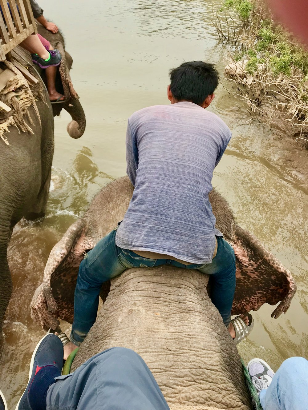 Entering w elephant & Mahout in mekong river to cool off  (Houay Hong, Laos.jpg
