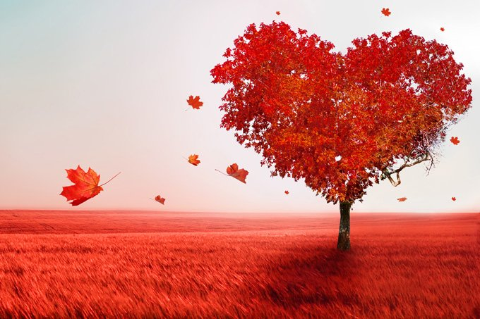 Love (Heart Tree).jpg*.jpg