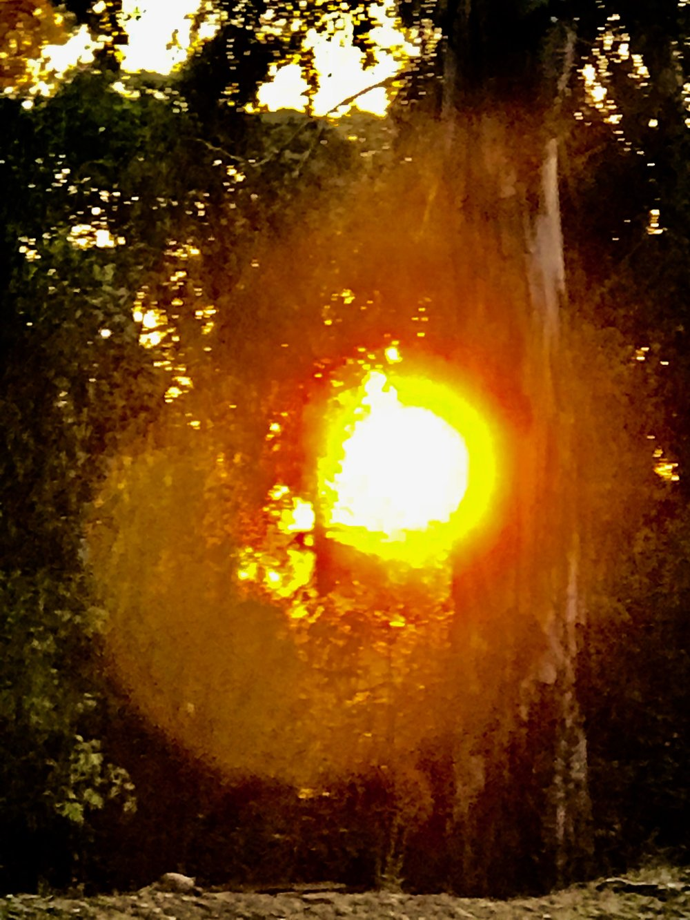 Sunsetting between the trees.jpg*.jpg