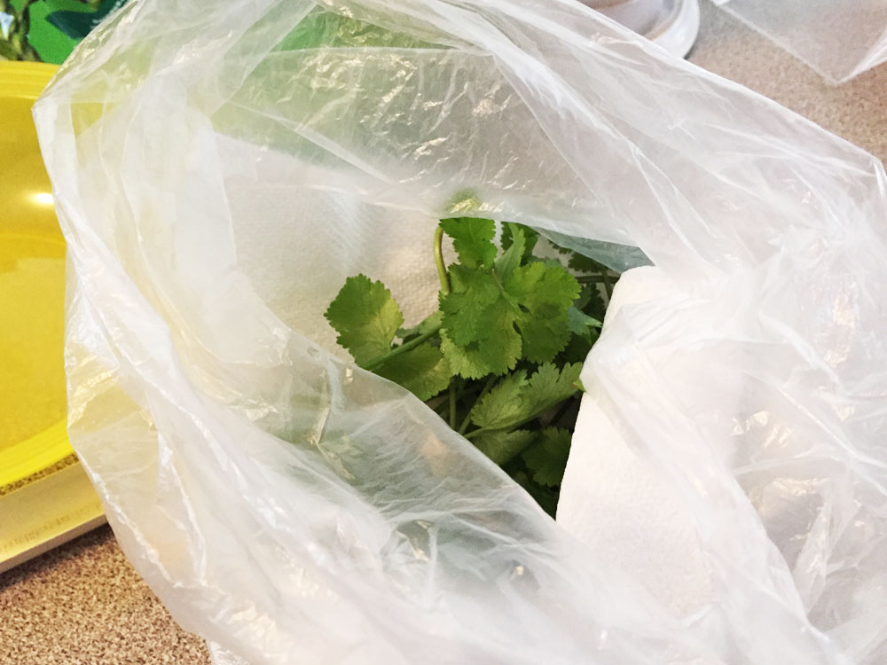 Store your Herbs in the Fridge in a Piece of Paper Towel in a Bag