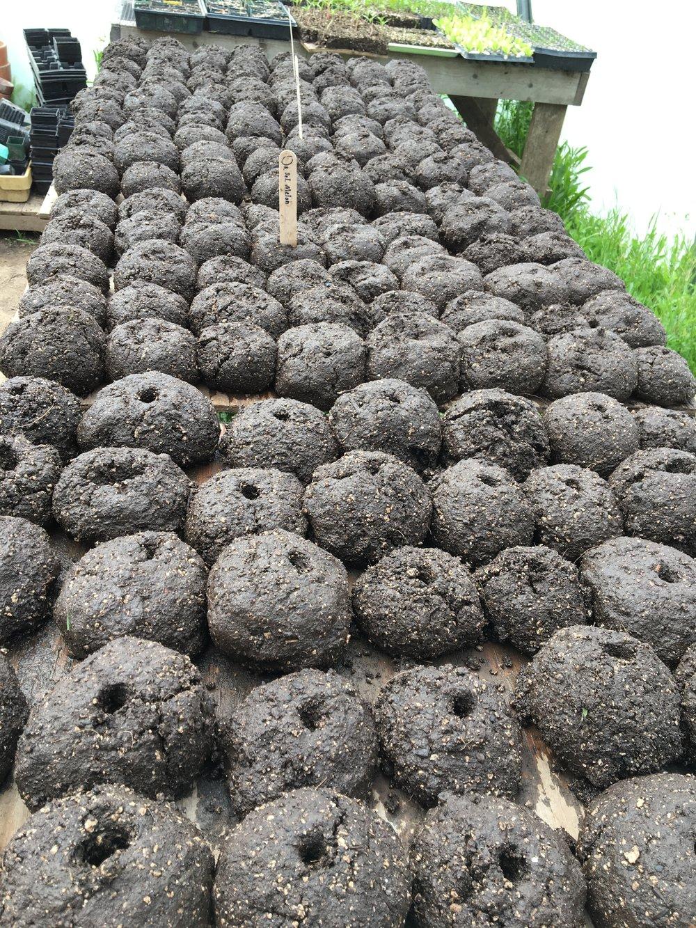 Seed Bombs_pumpkins_melons.jpg