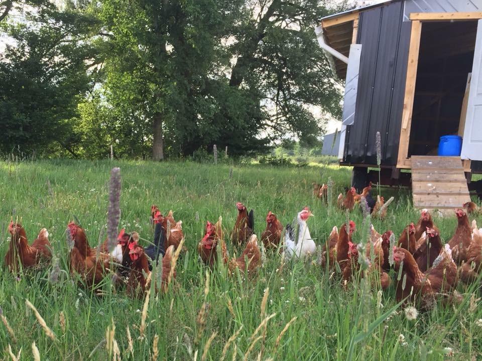 Ferme Patch Farm