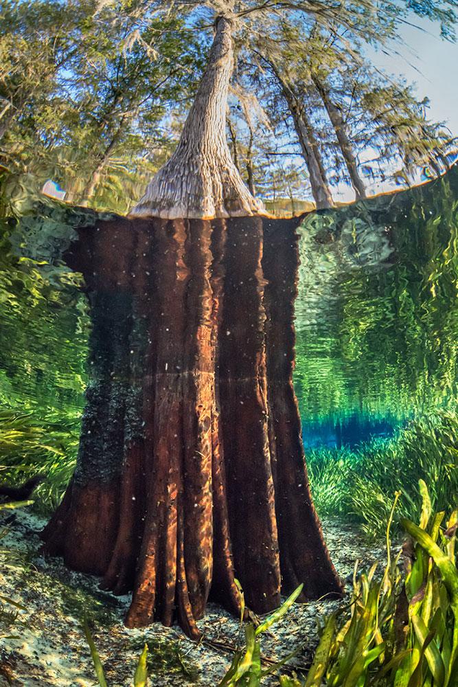Jackson Blue Springs, Blue Springs Park. Photo by John Moran.