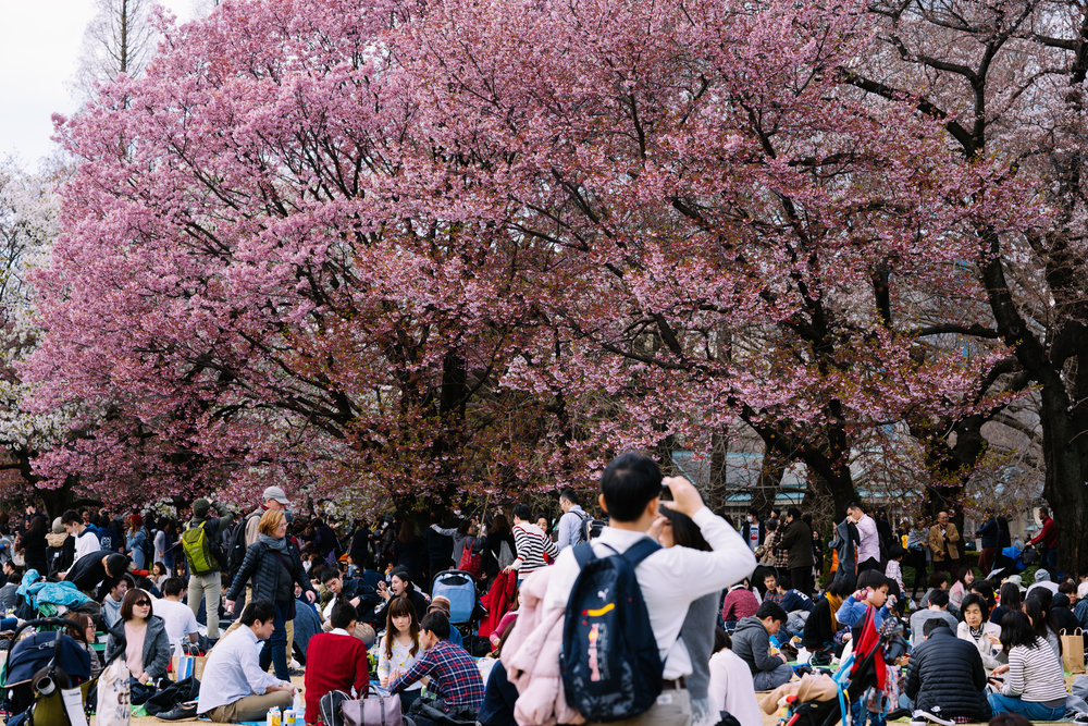 Lots and lots of people had the right idea today, perfect chance to enjoy the cherry blossoms