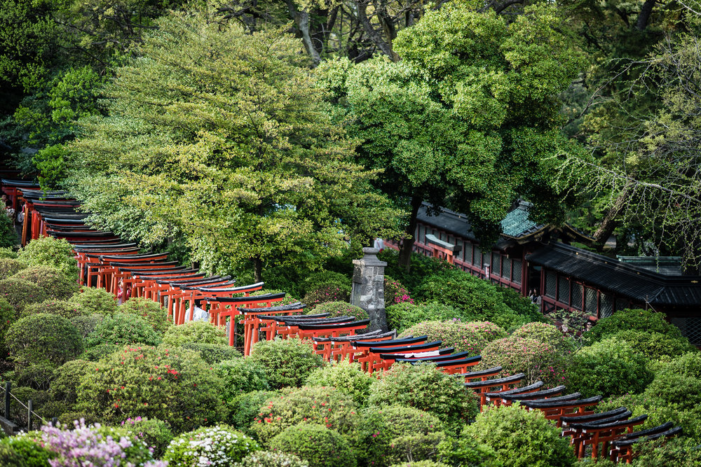 Through the Azaleas you can walk through paths of red arches sponsored by patrons of the shrine