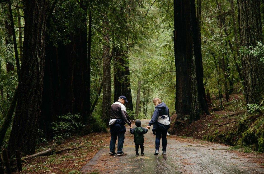 big-basin-redwoods-26.jpg