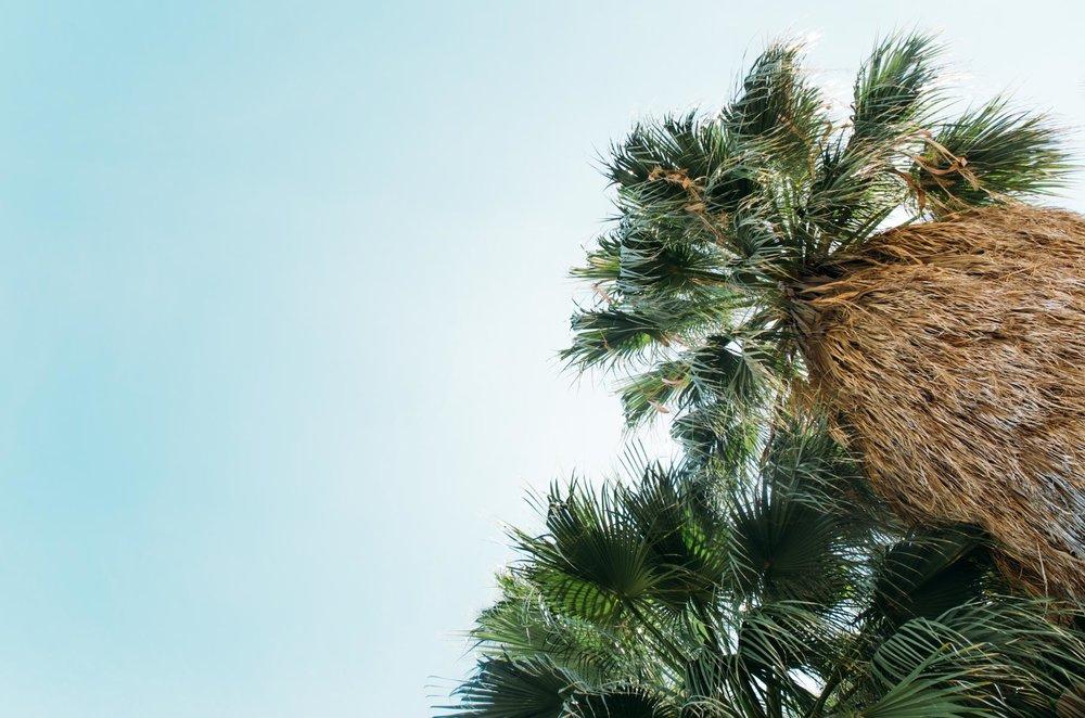joshua-tree-88.jpg