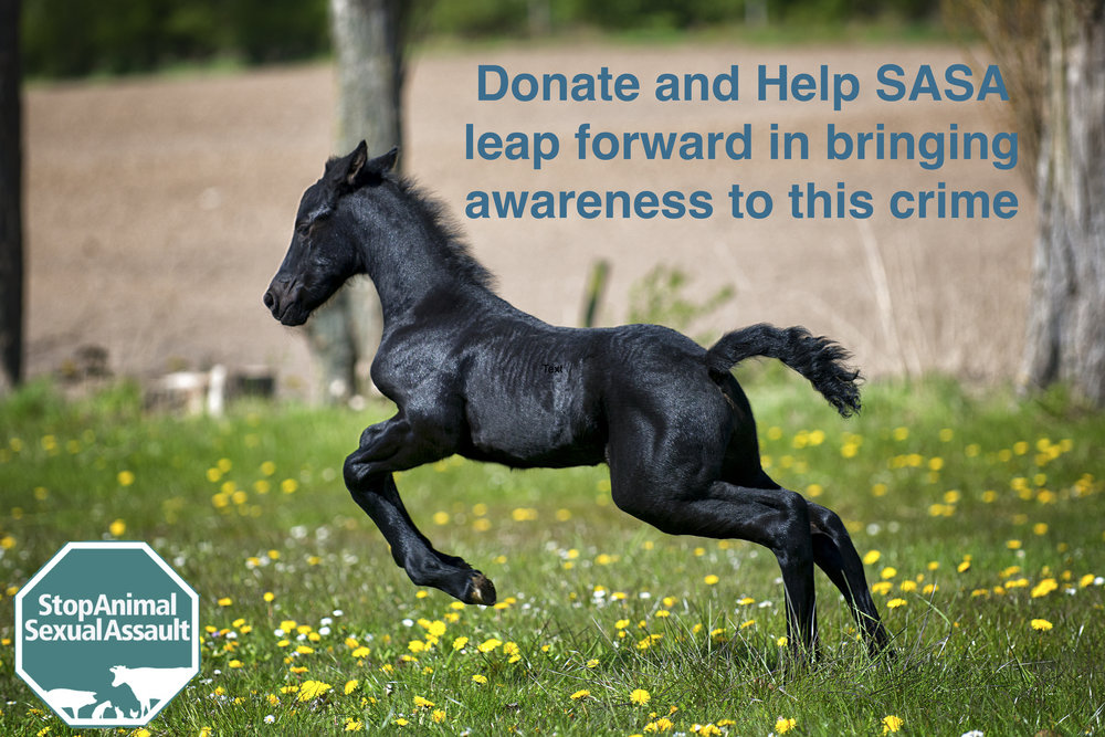 Horse Donate picture.jpeg