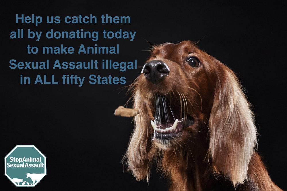 Catching Treat Donation.jpeg