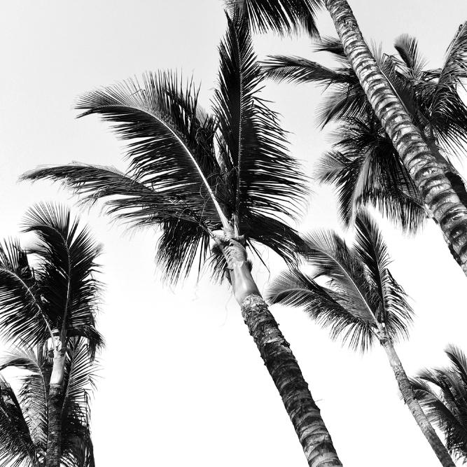 Miami Beach, FL - VISTING TBD