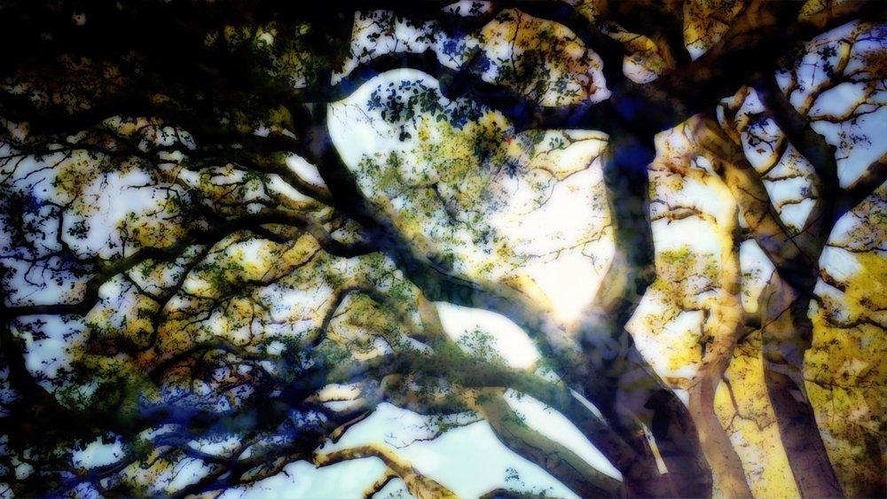 3 - Sunlight through forest.jpg