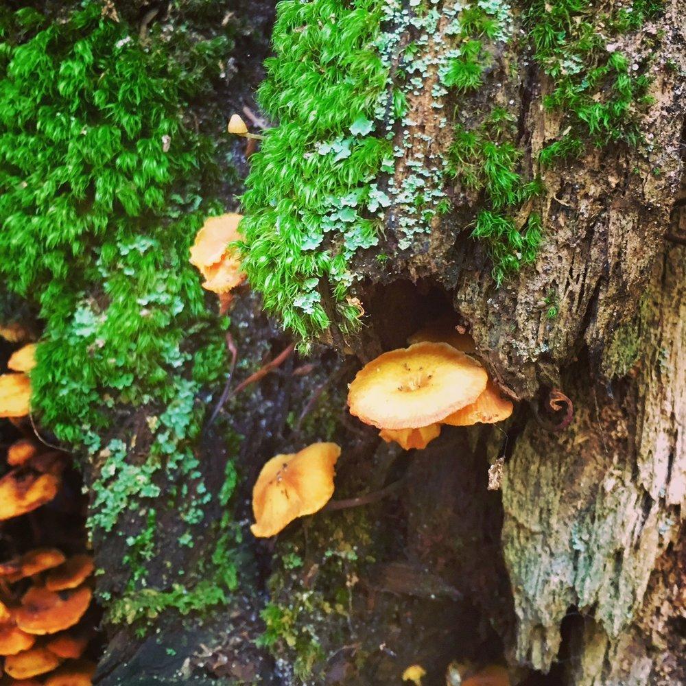 moss mushroom.JPG