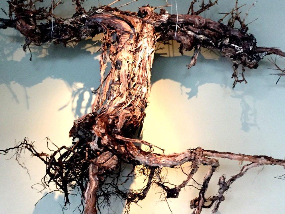 vine-root.jpg