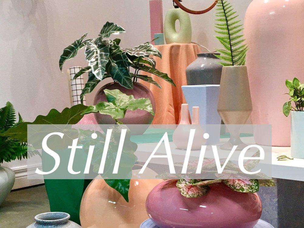 Still Alive (still life), NAC FLEA MARKET GALLERY, St. Catharines Factory One Flea Market, Opening Soon