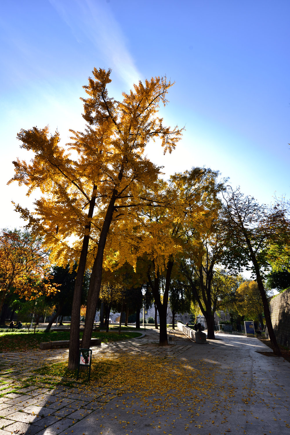 Autumn in Split.jpg